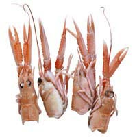 42533 - LANGOUSTINES HEADS AND CLAWS