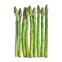 42890 - ASPARAGUS GREEN  10 - 16 MM