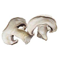 42240 - CHAMPIGNON SLICES 12 - 16 MM