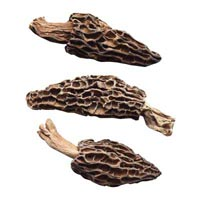 42328 - MORELS EXTRA WITH STEMS 0,5 CM
