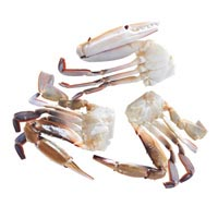43151 - BLUE SWIMMING CRAB