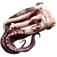 44348 - GIANT SQUID TENTACLES